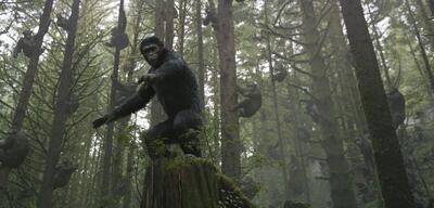 Wer hat das Zeug zum Affen?