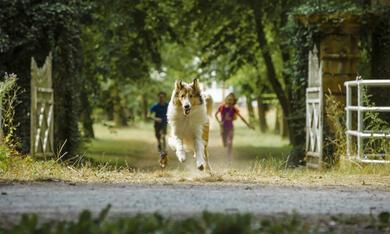 Lassie - Eine abenteuerliche Reise - Bild 5