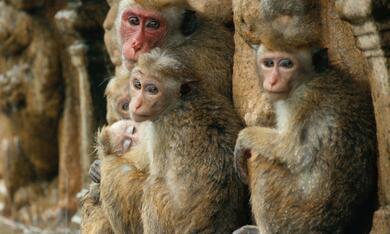 Im Reich der Affen - Bild 7