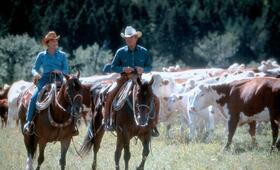 Der Pferdeflüsterer mit Robert Redford und Kristin Scott Thomas - Bild 56
