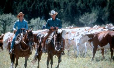 Der Pferdeflüsterer mit Robert Redford und Kristin Scott Thomas - Bild 5
