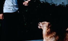 Dr. Dolittle mit Eddie Murphy - Bild 20