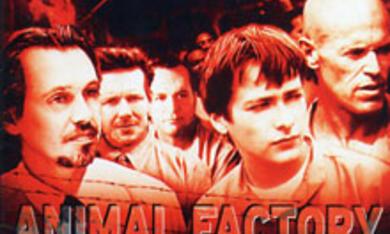 Animal Factory - Rache eines Verurteilten - Bild 1