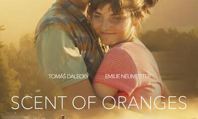 Orangentage - Bild 7