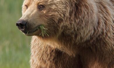 Bären - Bild 4