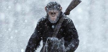 Bild zu:  Planet der Affen: Survival