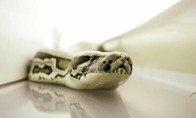 Snakes on a Plane - Bild 10