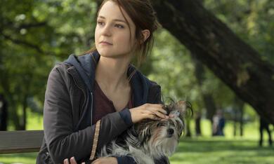 Bailey - Ein Hund kehrt zurück mit Kathryn Prescott - Bild 5