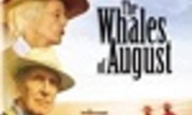 Wale im August - Bild 1