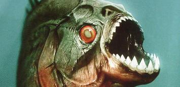 Bild zu:  Piranha 3D
