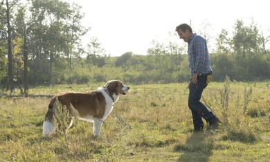 Bailey - Ein Hund kehrt zurück mit Dennis Quaid - Bild 10