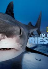 Im Reich der Riesenhaie