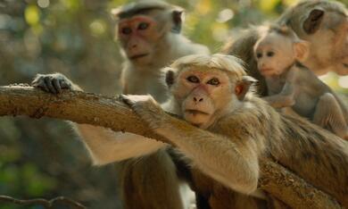 Im Reich der Affen - Bild 5