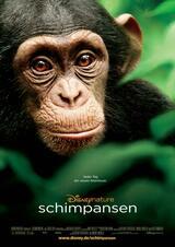 Schimpansen - Poster