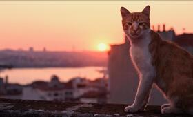 Kedi - Von Katzen und Menschen - Bild 6