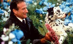 Robin Williams - Bild 114