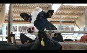 Das System Milch - Bild 6