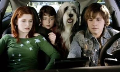 The Shaggy Dog - Hör mal wer da bellt - Bild 6
