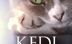 Kedi - Von Katzen und Menschen - Bild 10