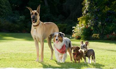 Marmaduke, Lucy, Einstein und Giuseppe - Bild 8