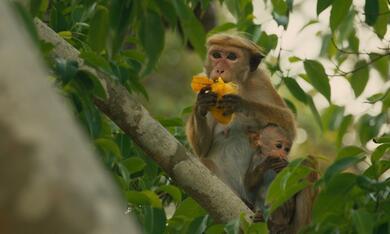 Im Reich der Affen - Bild 4