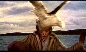 Die Vögel mit Tippi Hedren - Bild 1