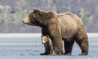 Bären - Bild 1