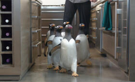 Mr. Poppers Pinguine - Bild 11