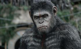 Planet der Affen - Revolution mit Andy Serkis - Bild 27