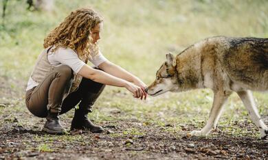 Reiterhof Wildenstein - Jacomo und der Wolf - Bild 7