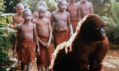 Congo - Bild 4