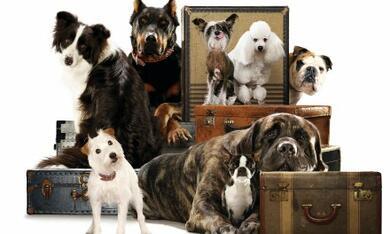 Das Hundehotel - Bild 11