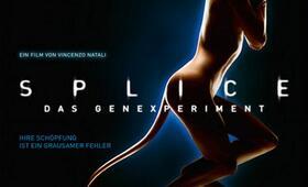 Splice Poster - Bild 1