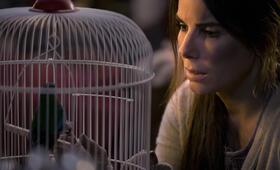 Bird Box mit Sandra Bullock - Bild 4