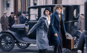 Katherine Waterston in Fantastic Beasts and Where to Find Them - Bild 13