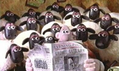 Wallace & Gromit unter Schafen - Bild 4