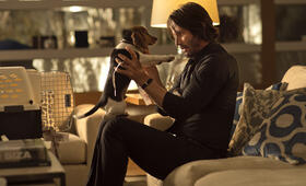 Keanu Reeves in John Wick - Bild 230