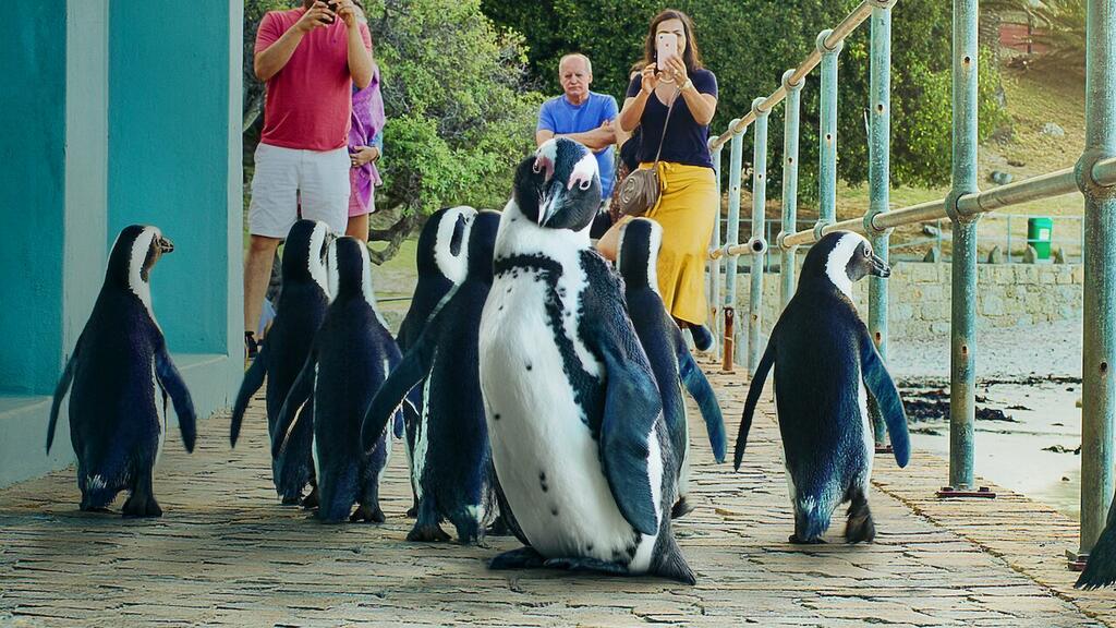 Stadt der Pinguine - Staffel 1