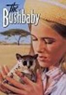 Das Buschbaby
