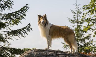 Lassie - Eine abenteuerliche Reise - Bild 1