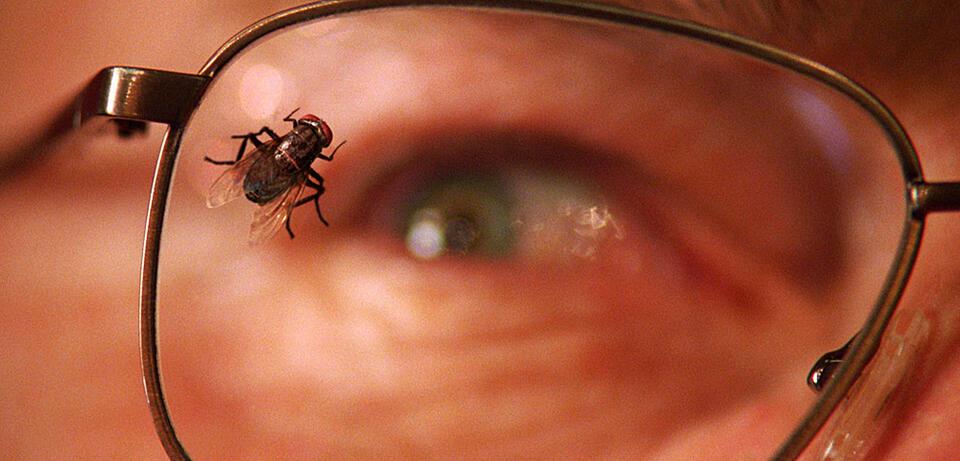 Die Fliege Breaking Bad