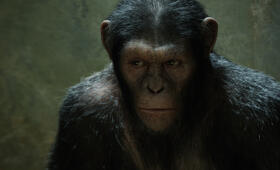 Planet der Affen: Prevolution - Bild 16