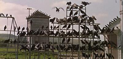 Hitchcocks Die Vögel aus dem Jahr 1963.