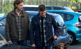Staffel 9 mit Jensen Ackles und Jared Padalecki - Bild 29