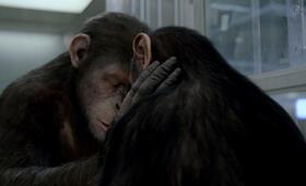 Planet der Affen: Prevolution - Bild 14