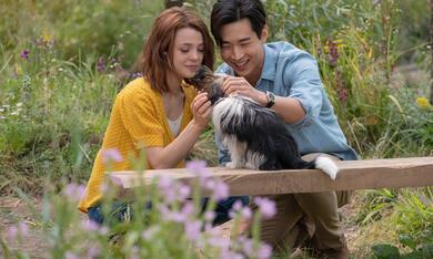 Bailey - Ein Hund kehrt zurück mit Kathryn Prescott und Henry Lau - Bild 8