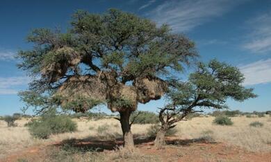 Wächter der Wüste - Bild 2