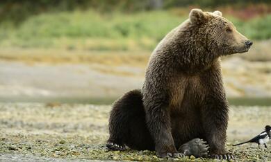 Der Bär in mir - Bild 3