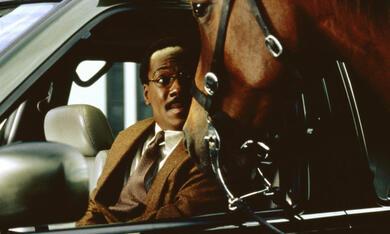 Dr. Dolittle mit Eddie Murphy - Bild 10