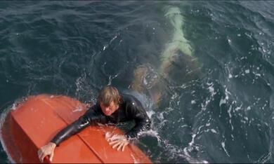Der weiße Hai - Bild 2